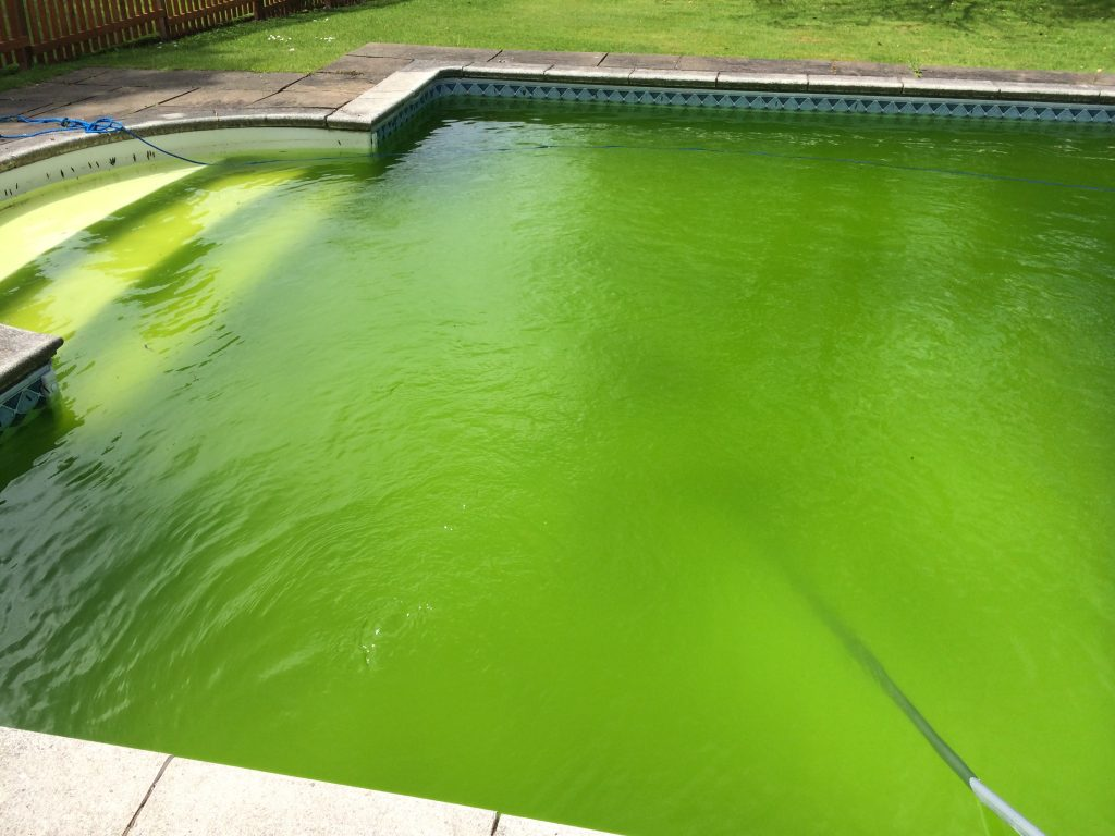 Chemical Dosing to Remove Algae From a Private Pool in Cheshire